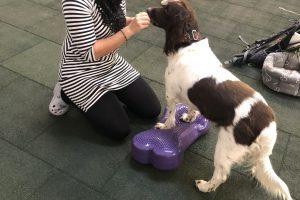 Balanční cvičení psů u Filípka (2)