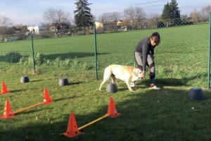 Fyzioterapie psů u Filípka orig (1)
