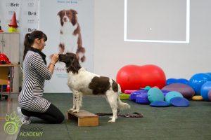 Fyzioterapie psů u Filípka orig (4)