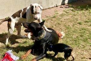 Hlídání psů u Filípka (1)
