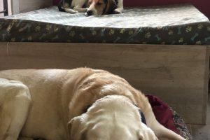 Hlídání psů u Filípka (10)