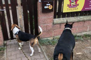 Hlídání psů u Filípka (12)