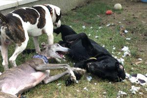 Hlídání psů u Filípka (16)