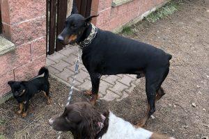 Hlídání psů u Filípka (4)