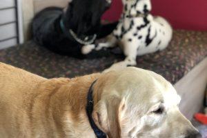 Hlídání psů u Filípka (5)