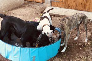 Hlídání psů u Filípka (6)