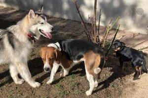 Hlídání psů u Filípka (7)
