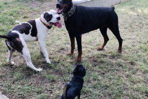 Hlídání psů u Filípka (8)