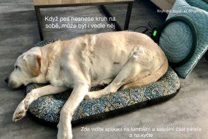 Magnetoterapie psů u Filípka (6)