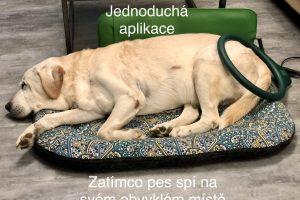 Magnetoterapie psů u Filípka (9)