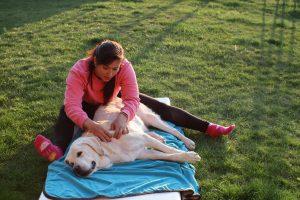 masáž rehabilitace psů u Filípka (3)